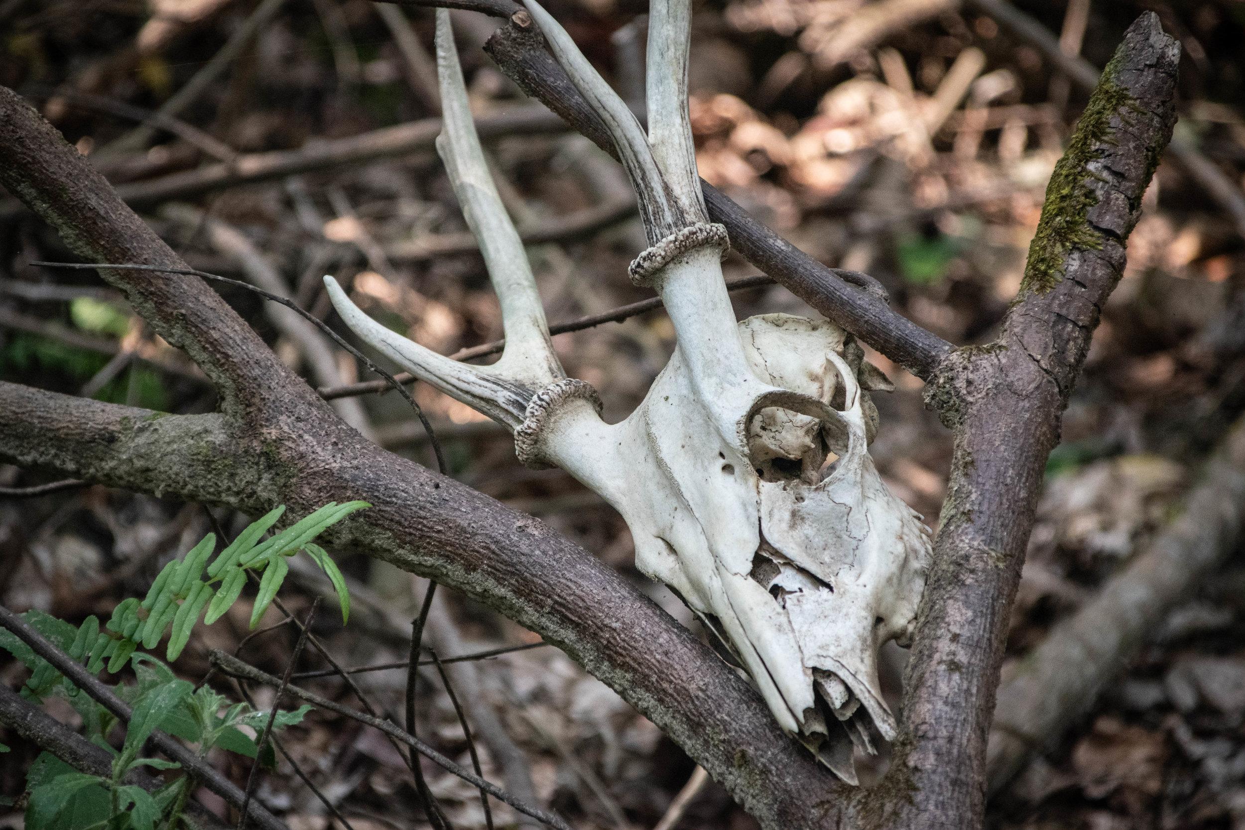 Chitwan Safari 19 © SBGD-64.jpg
