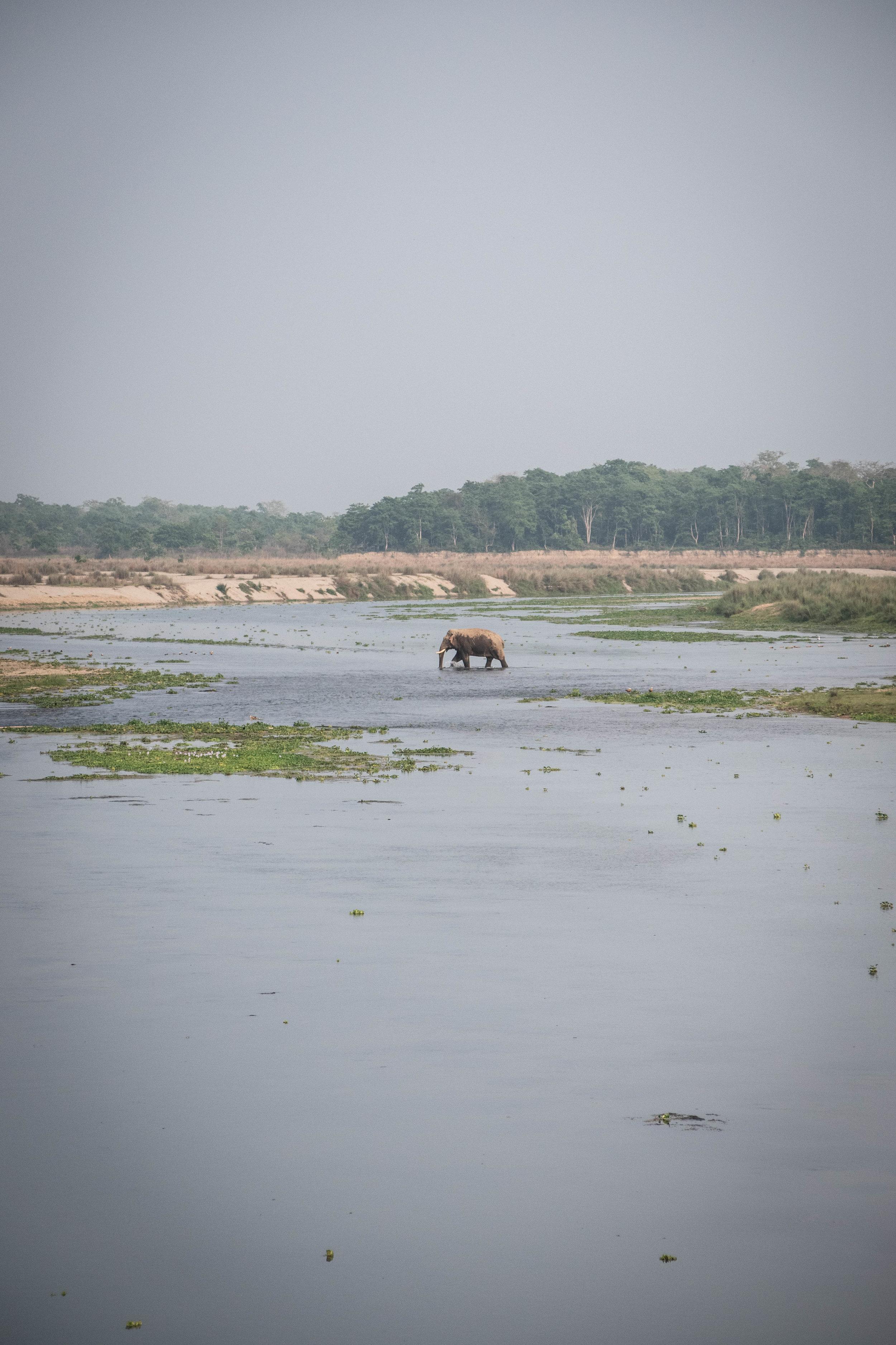 Chitwan Safari 19 © SBGD-73.jpg