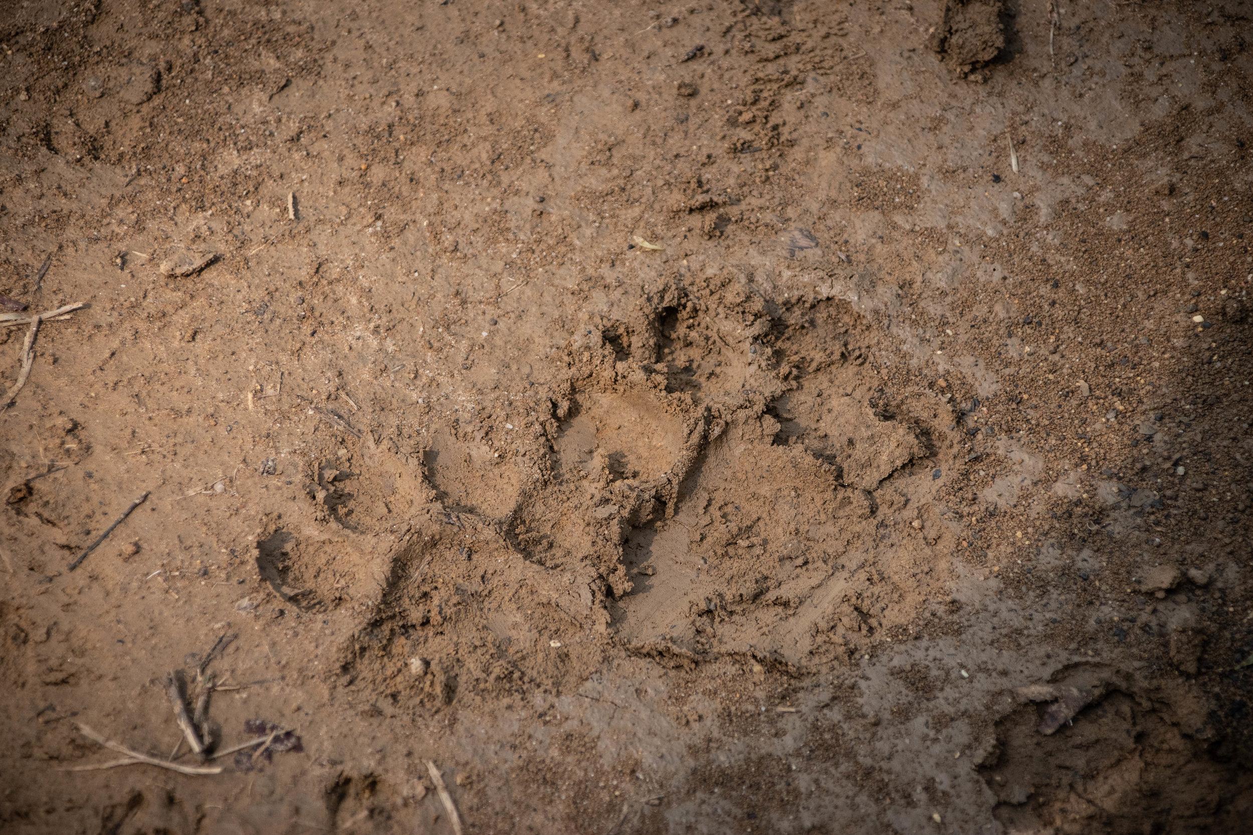 Chitwan Safari 19 © SBGD-22.jpg