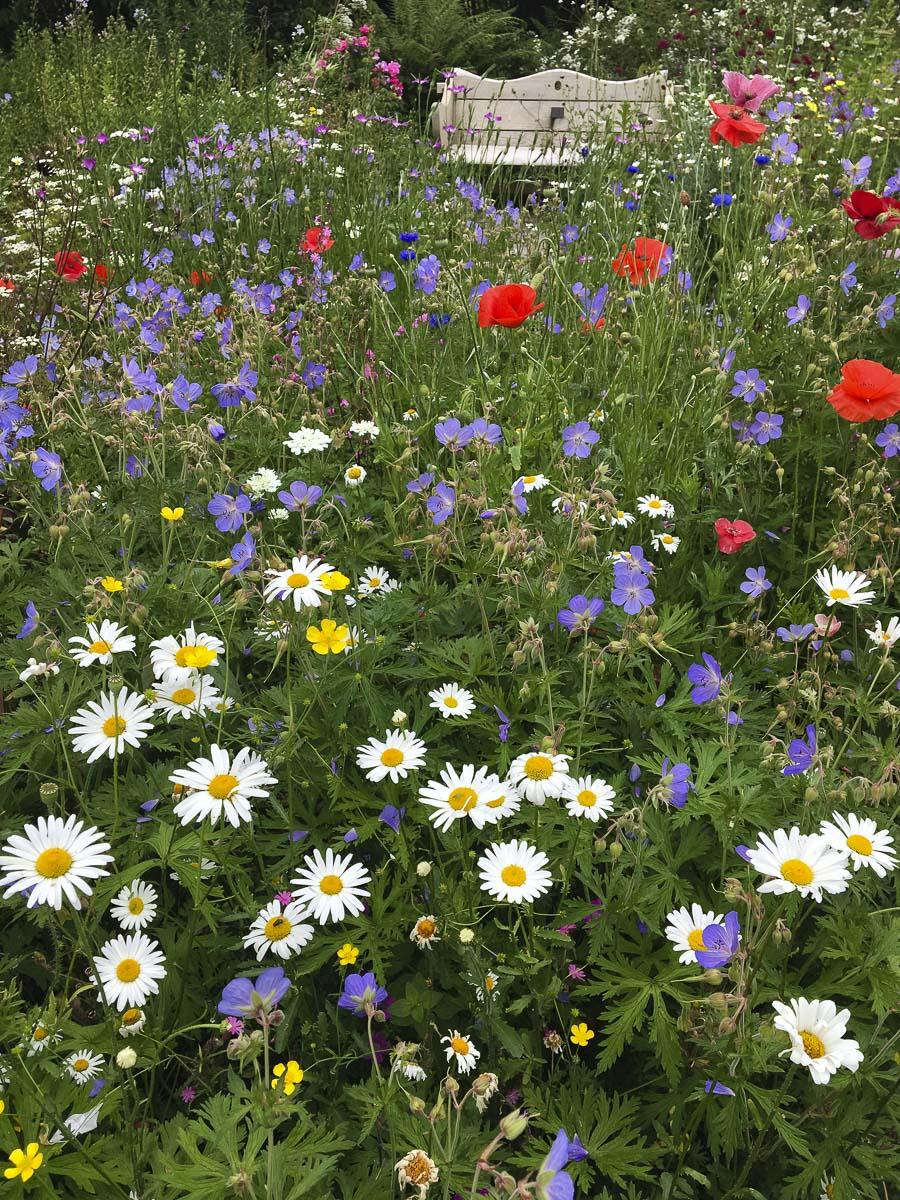 The Garden House Devon - Cottage Garden-6330.jpg