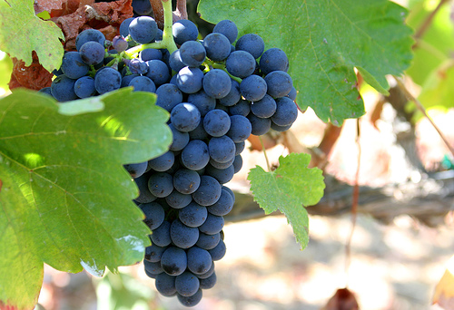 wijnbar-wijnproeverij-amersfoort-wijncursus-utrecht-high-wine-winebar-druiven.jpg