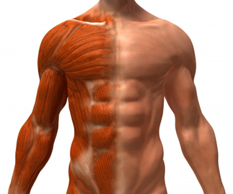 chiropractic patient with muscle spasms and trigger points