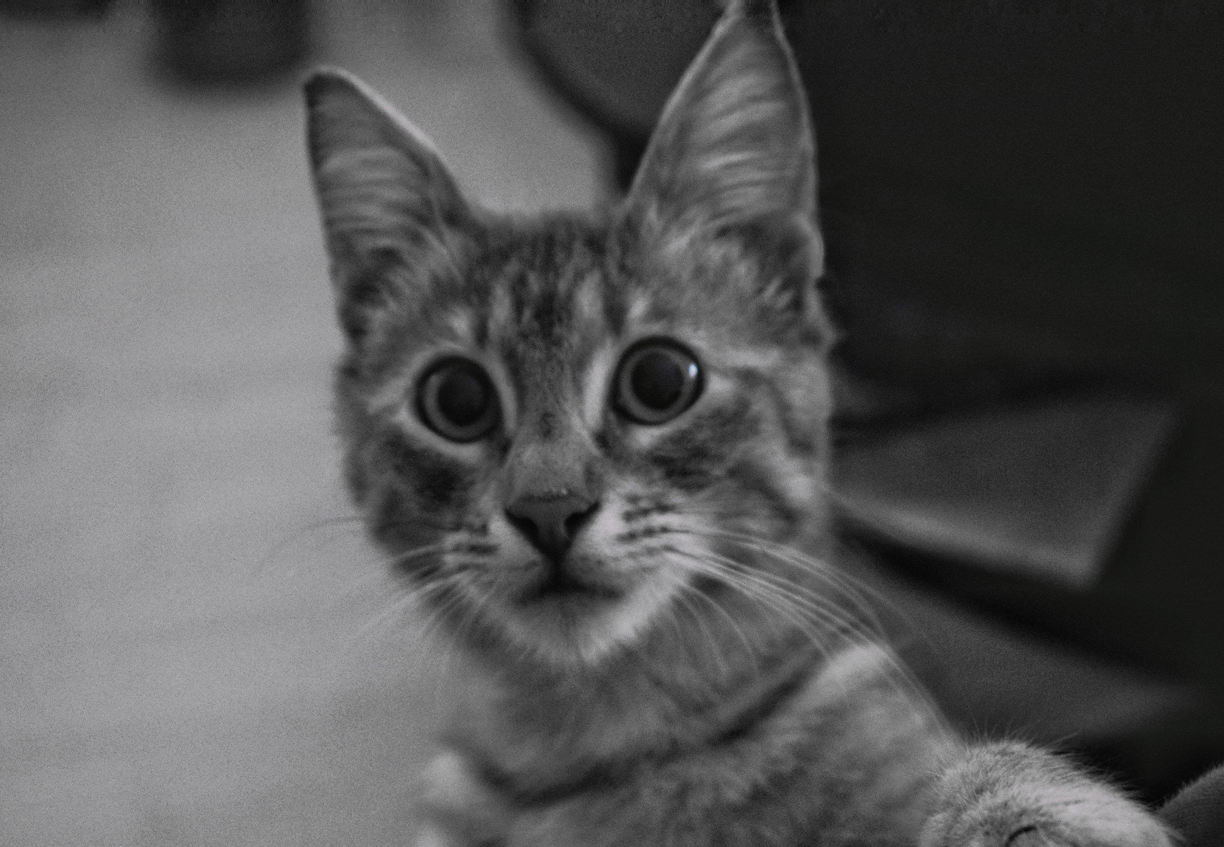 Meet the cuddly, fuzzy co-founder of WeedCopywriter.com