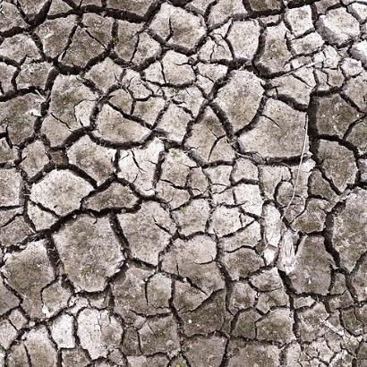 DROOGTE - wist je dat de bodem bij deze droogte in een soort 'winterslaap' gaat? De regenwormen bijvoorbeeld, zij rollen zich op en wachten op nattere tijden. Ook de rest van het bodemleven doet weinig. Zodra het weer gaat regenen komt het bodemleven weer tot bloei, gewoon alsof er niets is gebeurd. De natuur red zich wel. 🐛  #ondertwente #twente #bodem #ondergrond #bodemleven #natuur #droog #droogte