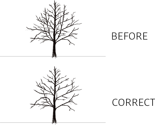 Russell Tree Experts Maintenance Pruning