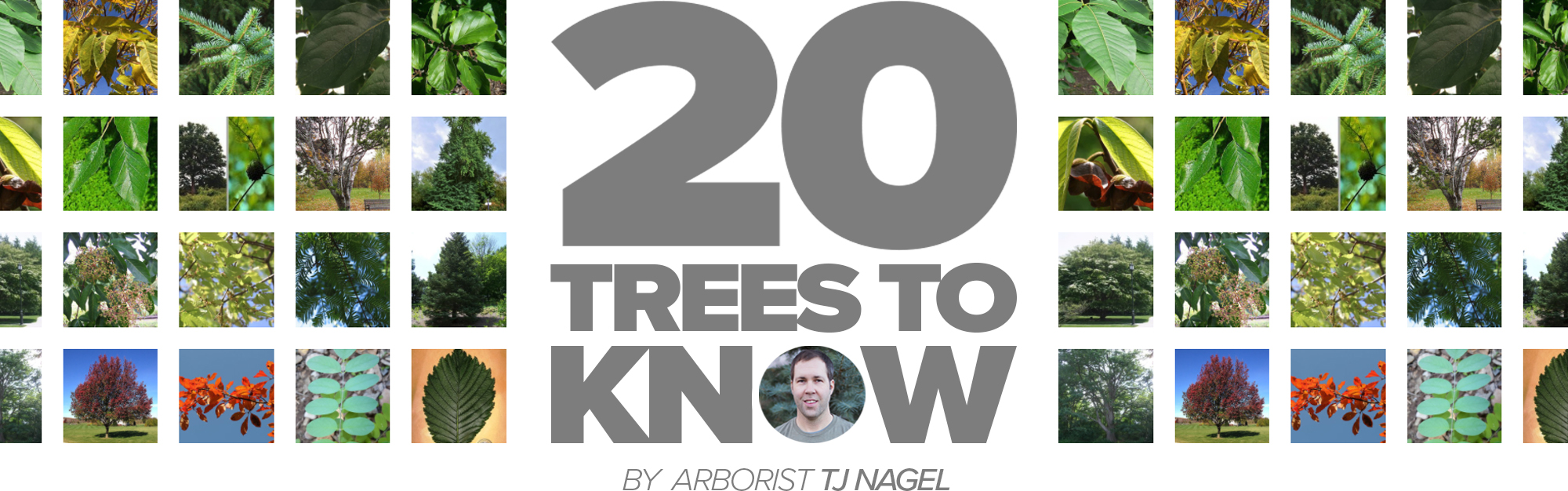 20 Trees to Know.jpg