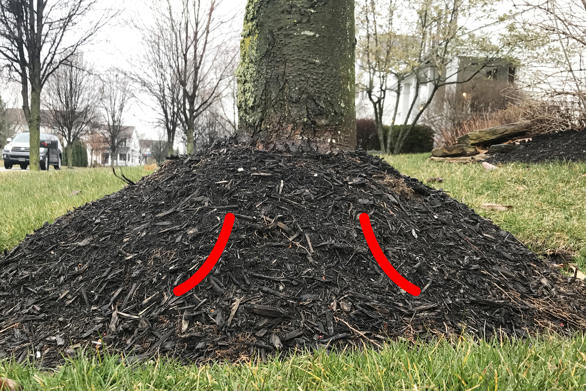 Bad - Root flare is below the mulch