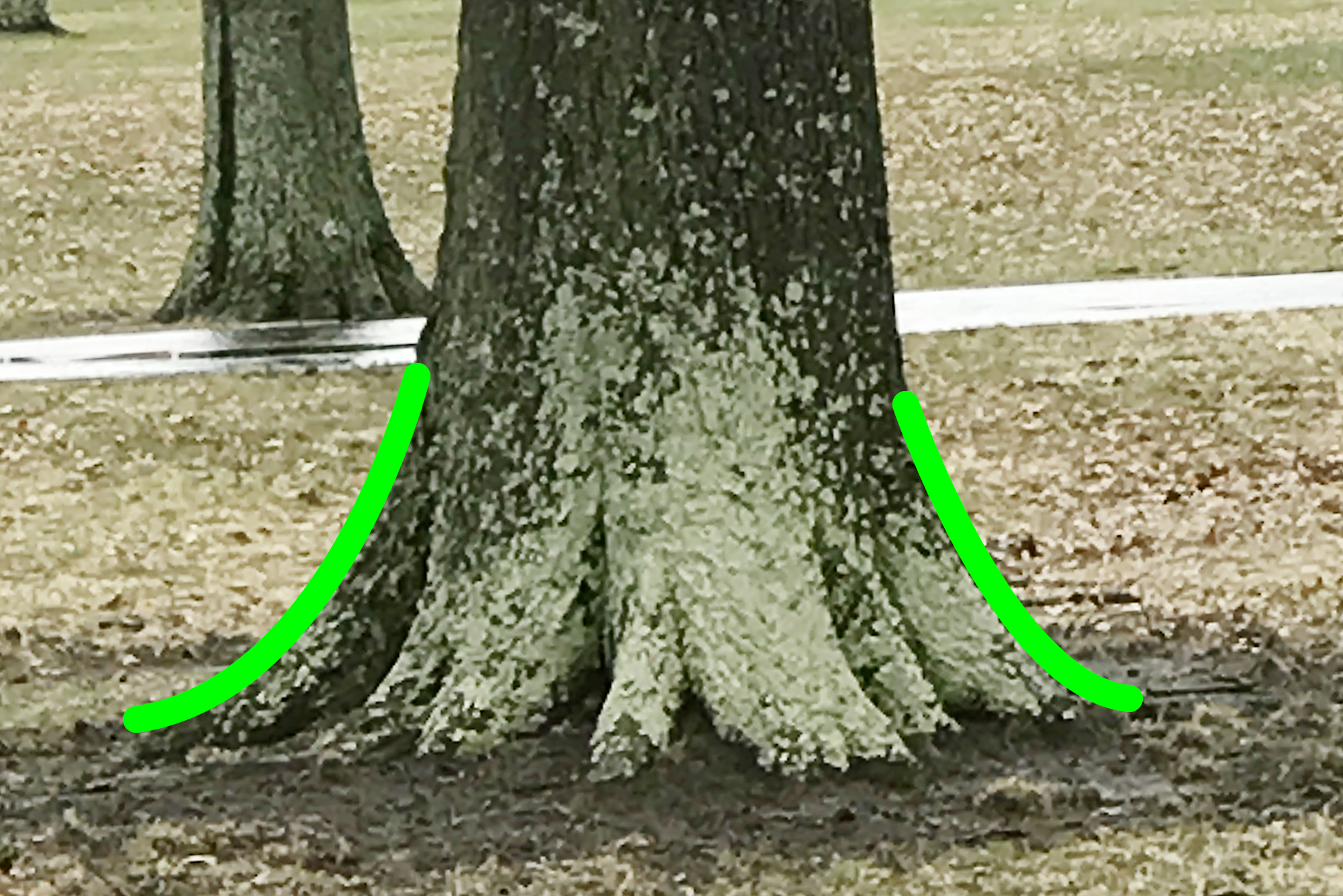 Good - Root flare is above ground