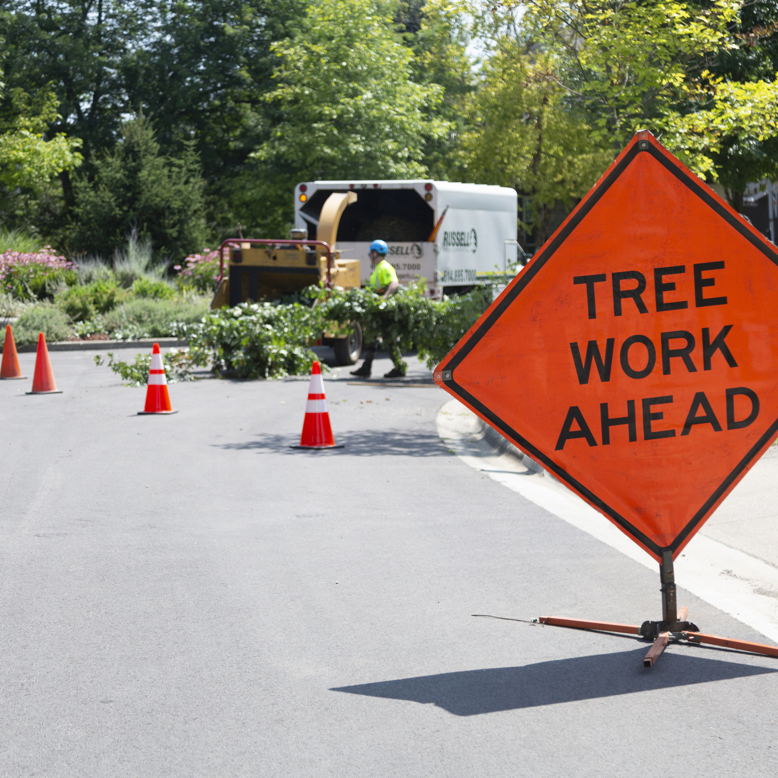 Street Tree Pruning - We're experts in pruning trees to clear city roadways of overhanging limbs.