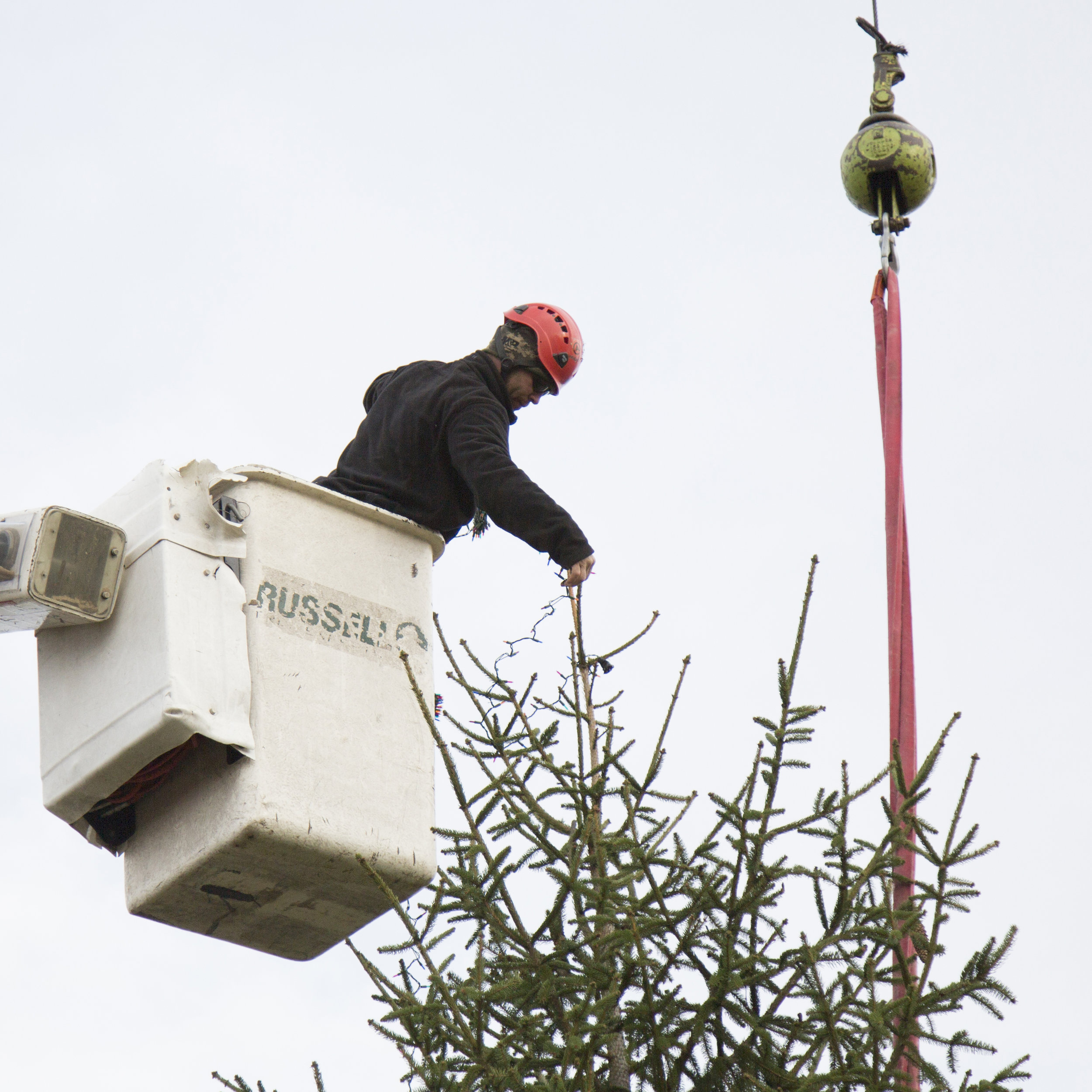 Holiday Tree Installations - With our cranes and buckets trucks, we can install and light even the largest of trees in your park