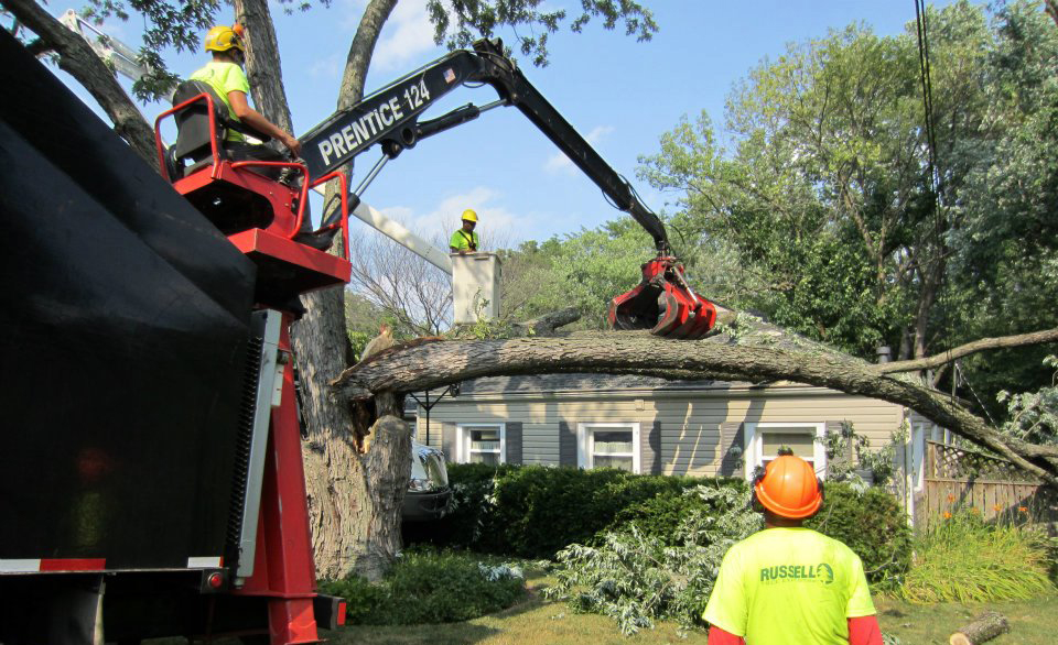 """A Silver Maple fell onto a house following a wind storm. The tight """"V"""" crotch near the base of the tree made this tree a likely victim of the wind storm."""