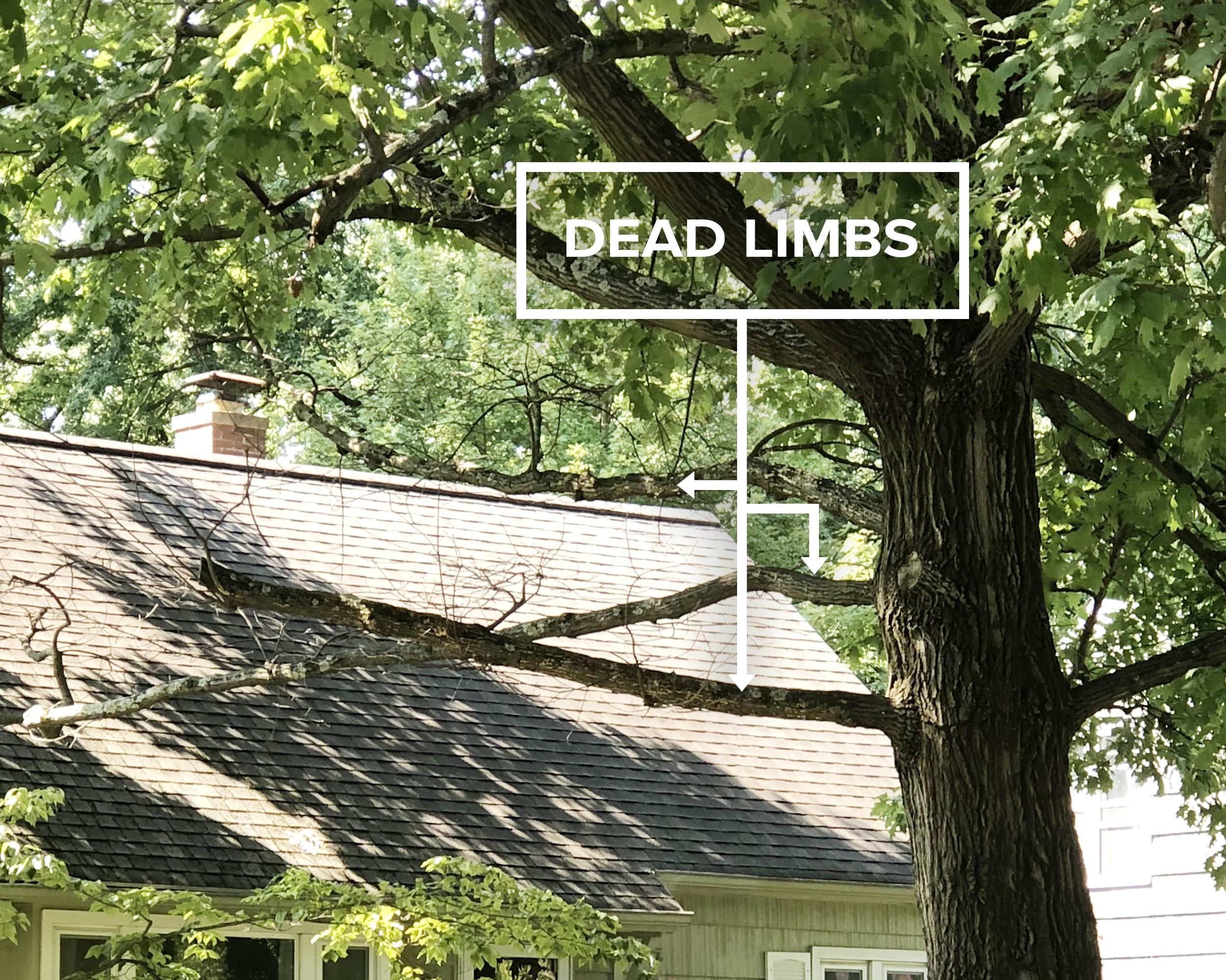 dead-limbs-over-house.jpg