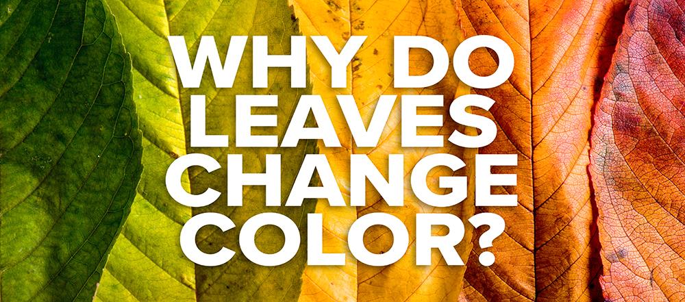180925-leaves-change-color.jpg
