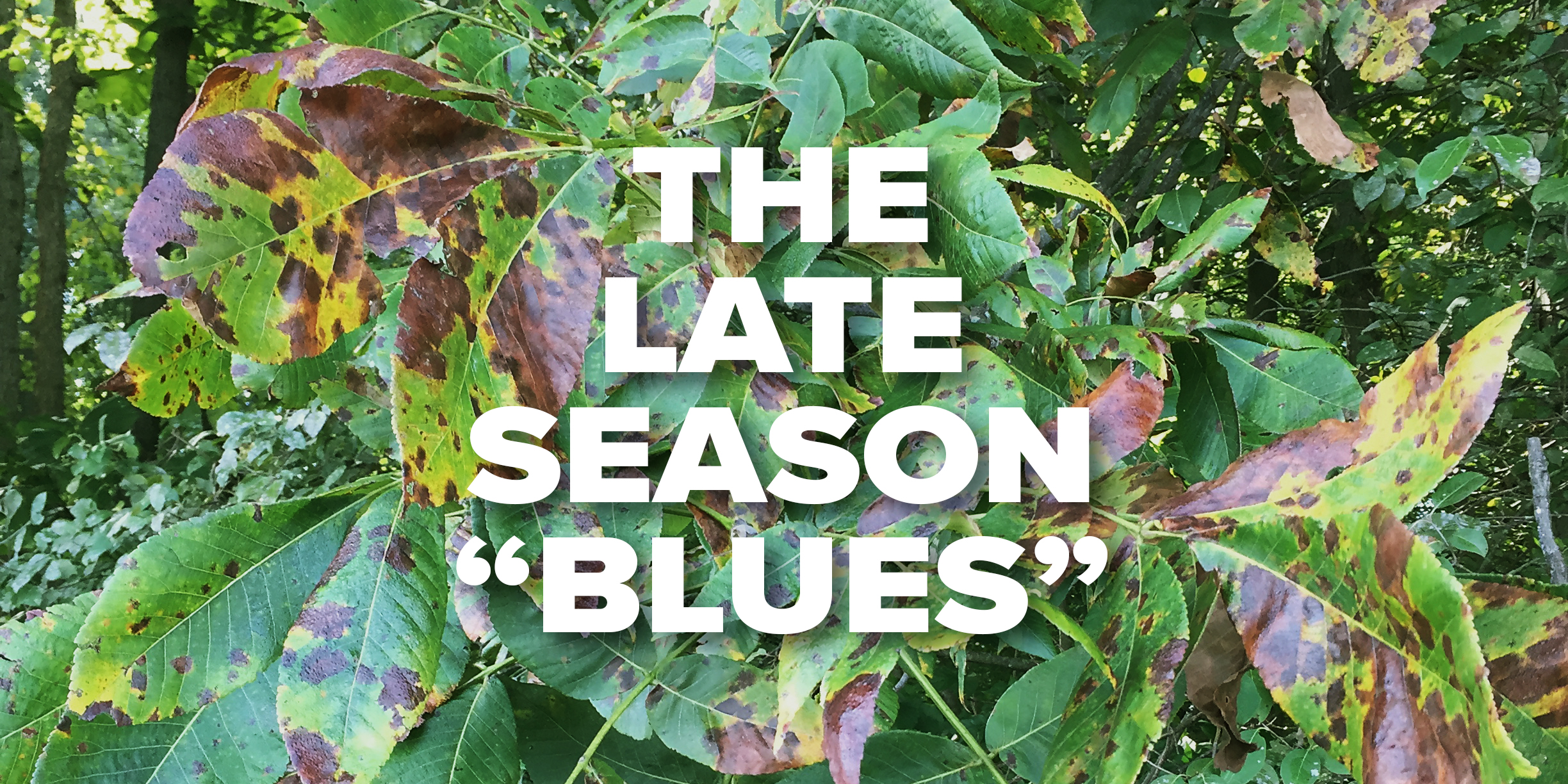 181001_rte_late_season_blues_04-v2.jpg