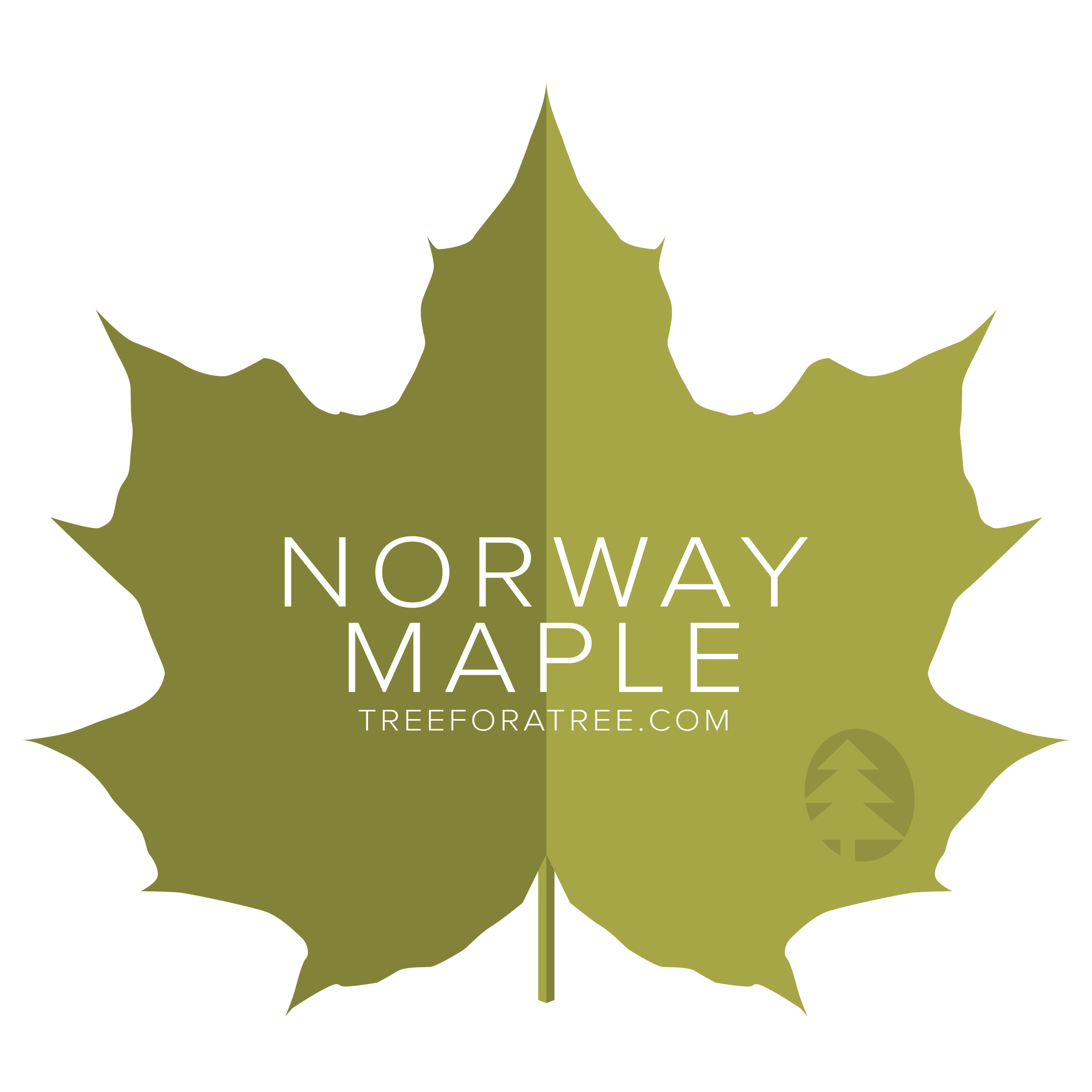 Norway Maple - Latin Name: Acer platanoidesGrowth Rate: MediumMature Height: ≈50 ftMature Spread: ≈50 ftState Champ: Knox Co. (83' high x 65' wide)