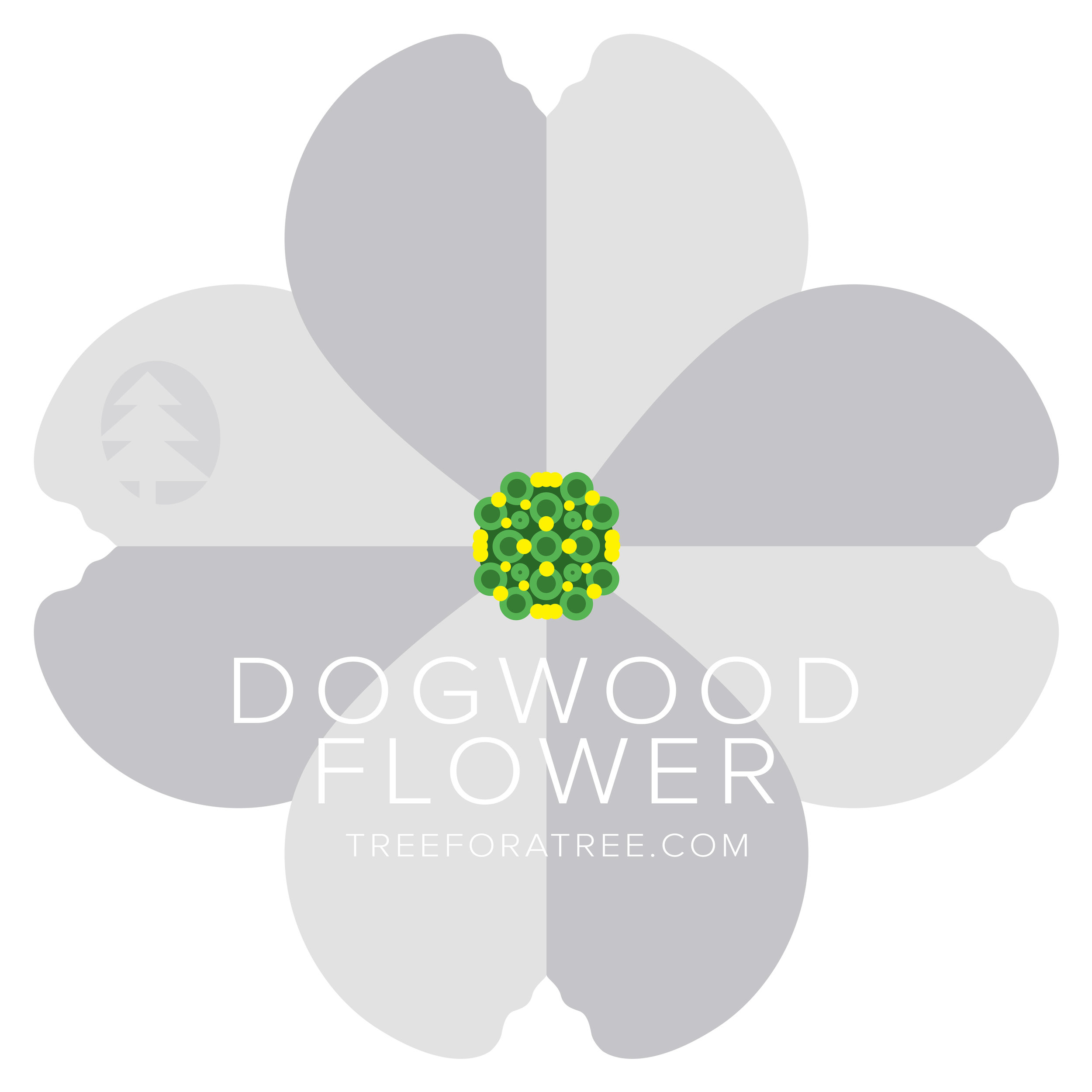 Dogwood - Latin Name: Cornus floridaGrowth Rate: SlowMature Height: ≈15 ftMature Spread: ≈20 ftState Champ: Licking Co. (33' high x 42' spread)
