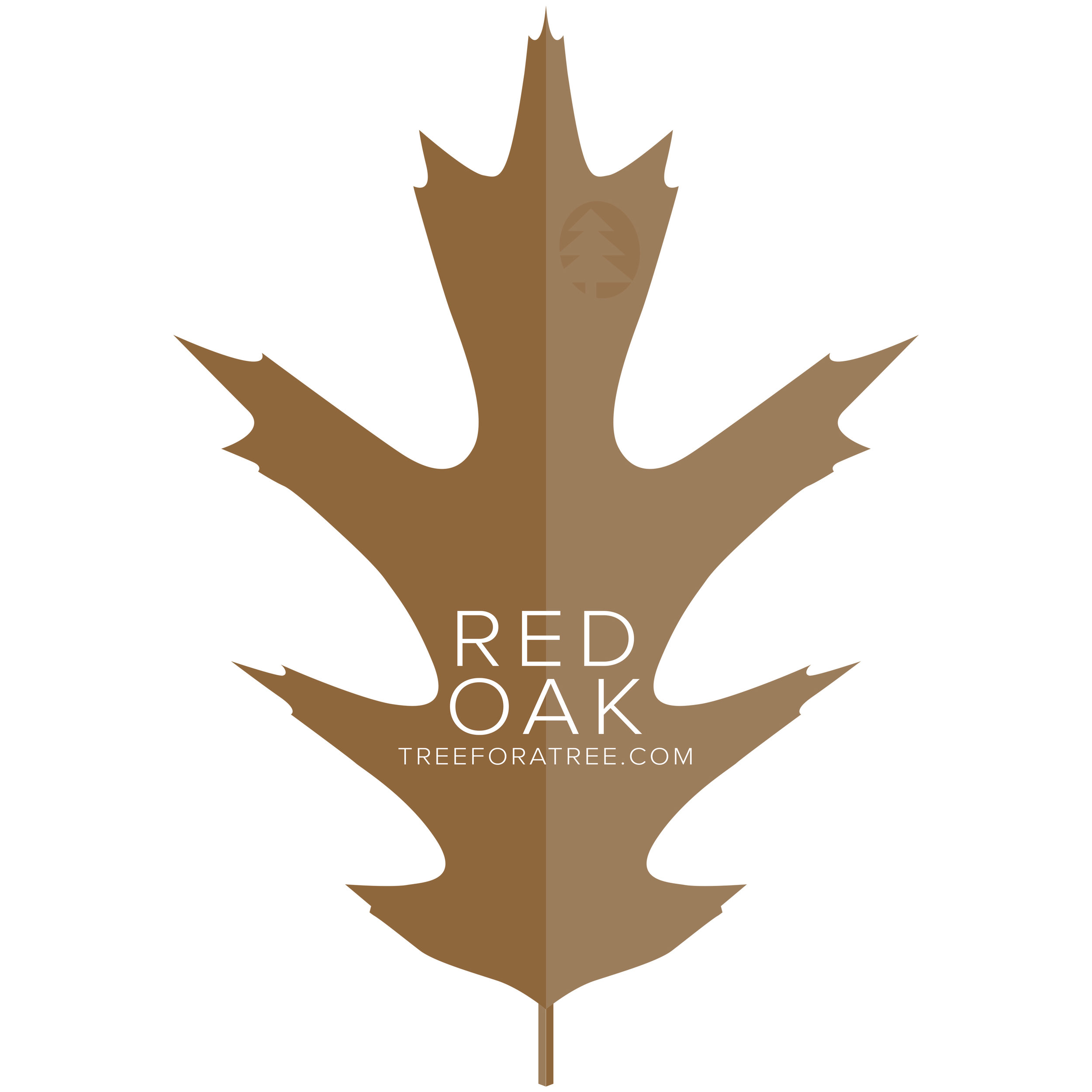 Red Oak - Latin Name: Acer rubrumGrowth Rate: Very FastMature Height: ≈60 ftMature Spread: ≈70 ftState Champ: Gallia (70' high x 59' spread)
