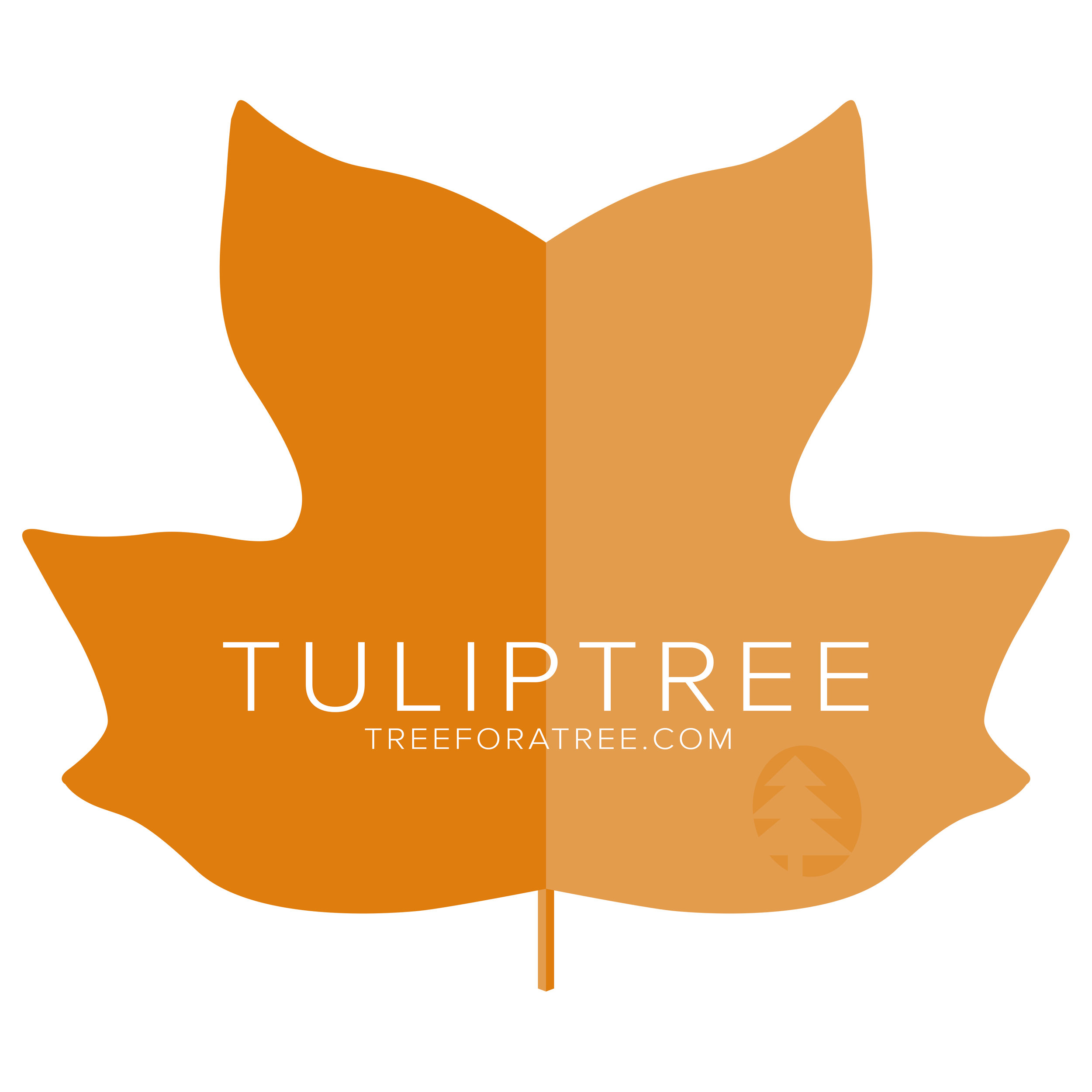 Tuliptree - Latin Name: Liriodendron tulipiferaGrowth Rate: Very FastMature Height: ≈80 ftMature Spread: ≈40 ftState Champ: Summit Co. (163' high x 91' spread)