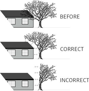 Pruning+to+clear.jpg
