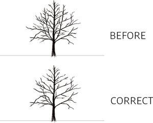Russell+Tree+Experts+Maintenance+Pruning.jpg