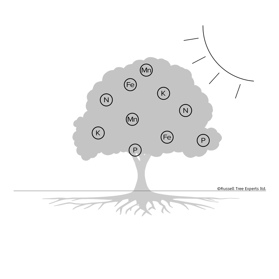 STEP 3Evapotranspiration - Through this process the tree is able to move nutrients from the soil, up the trunk, and into the outer canopy, carrying them dissolved in water to be used as needed. This process continues throughout the growing season.