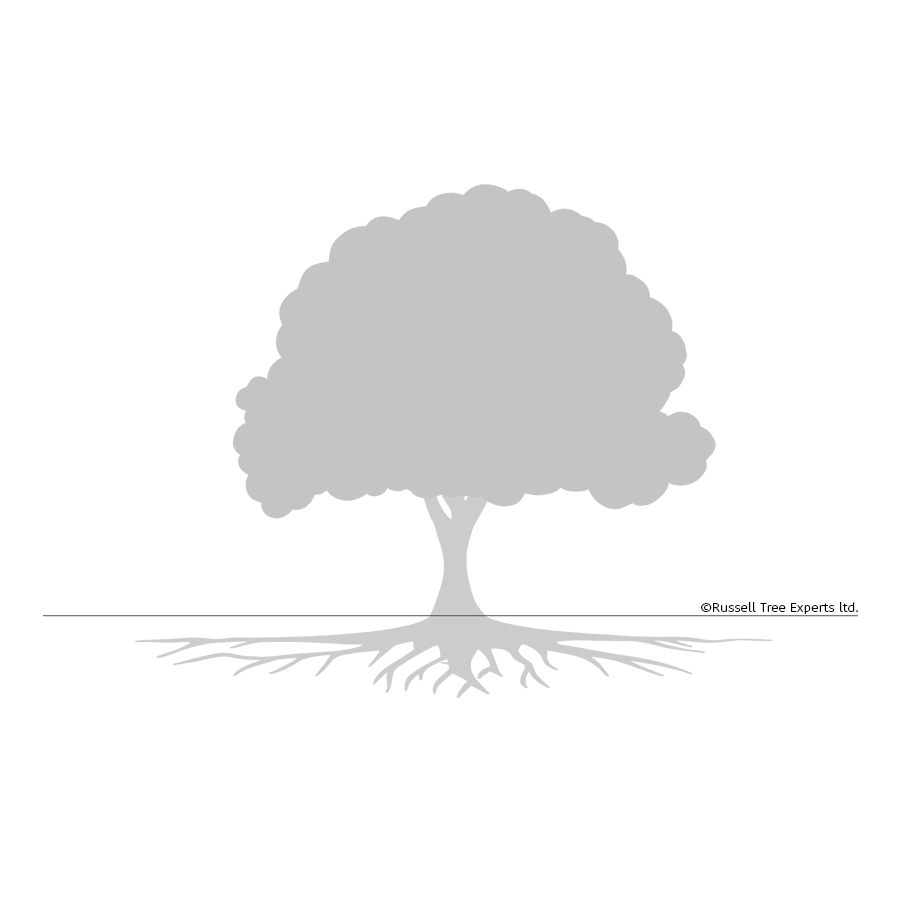 STEP 4Reduced Nutrient Levels - In urban soils macro and micronutrients can be depleted for several reasons, limiting metabolic processes. Fertilization helps maintain nutrient availability to trees by supplying needed elements that have been used by the tree or leached out of the soil.BACK TO STEP 1