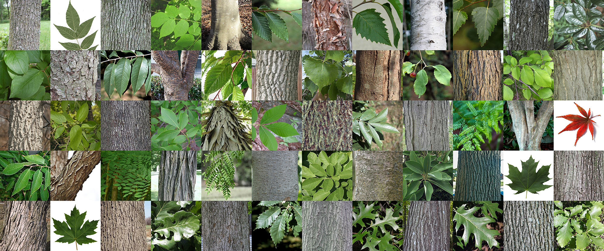 TREE ID QUIZZES -