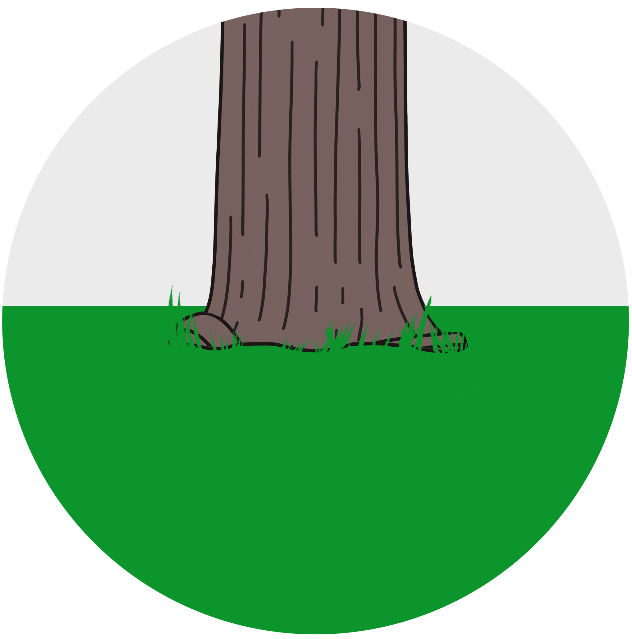 STEP 1 - Review the tree to see if any visible roots are wrapped around the base of the tree. Another symptom of girdling roots is die-back starting in the top of the tree.