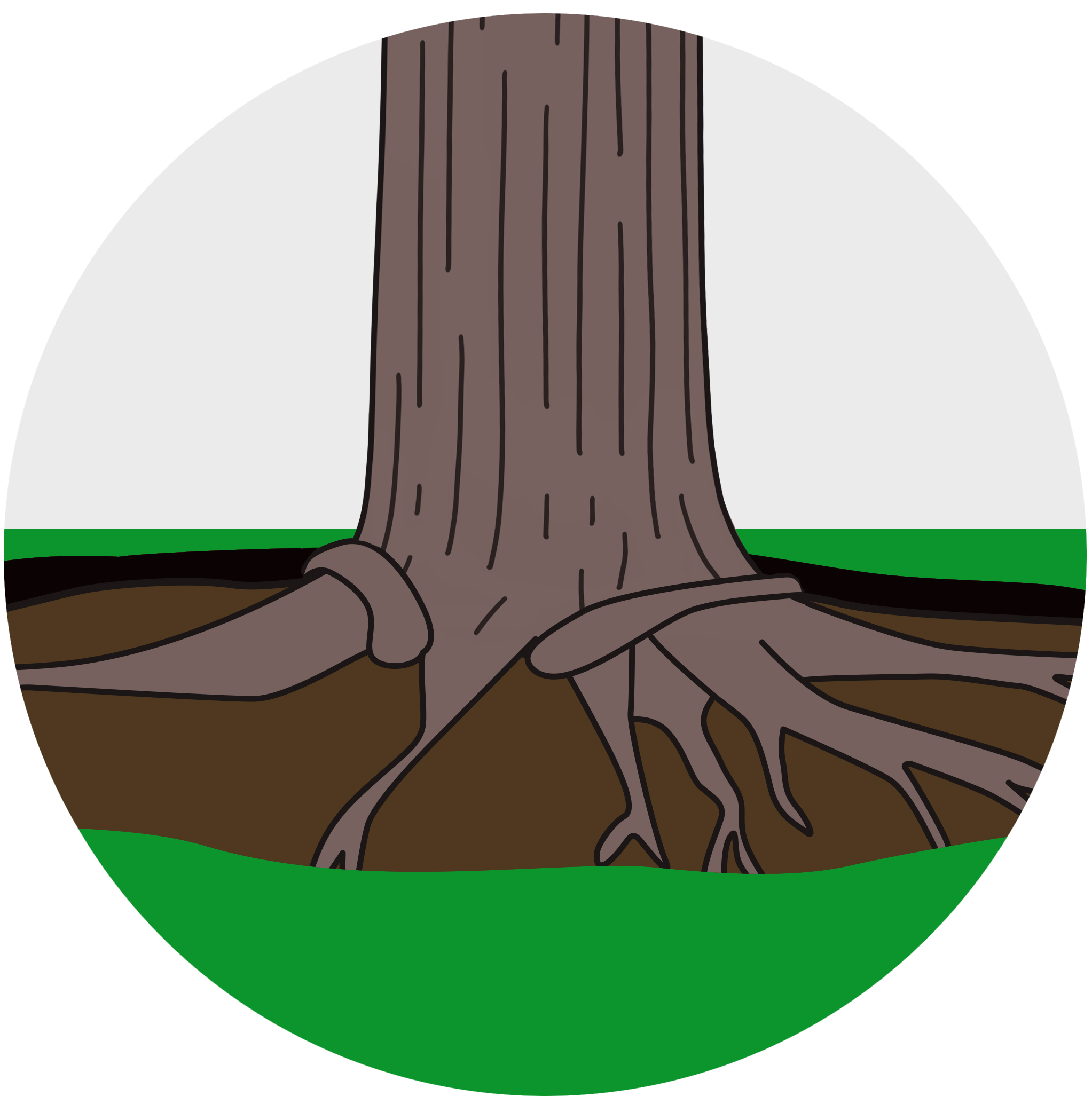 STEP 2 - Using an AirSpade, the soil will be blasted to expose the tree's root system below the surface. Don't worry, the AirSpade only moves the soil and does not hurt the tree and it's fibrous roots.