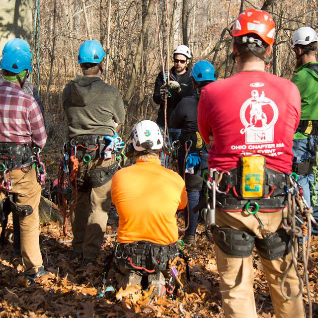 """- Russell Tree Experts hosts first """"Open Climb"""" inviting the public to try their hand at tree climbing"""