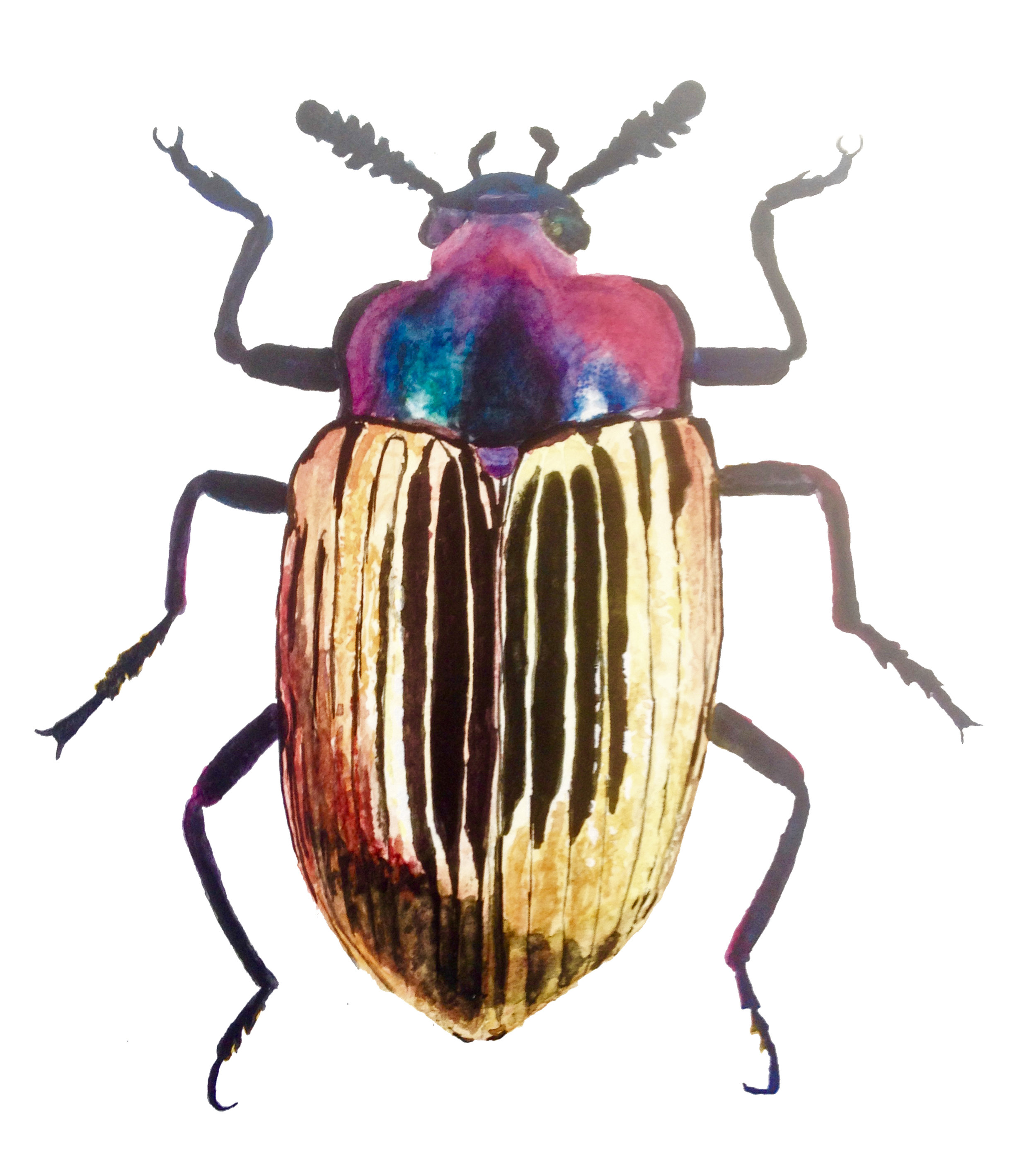 beetle watercolor.jpg