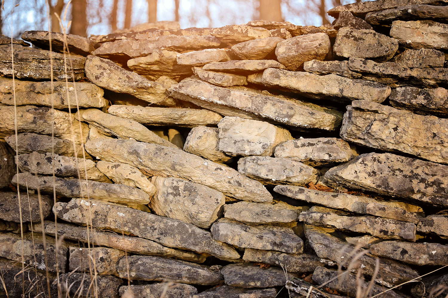 the farmer's wall - If you are so inclined, a hike or ride to the lower portion of our property will bring you to this phenomenal stone wall, built over 140 years ago. It was used to contain cattle in the pasture. At around 300m long, it is mind boggling to try to imagine the amount of labour it took to construct. It is a wonderful spot to stop for a picnic lunch.