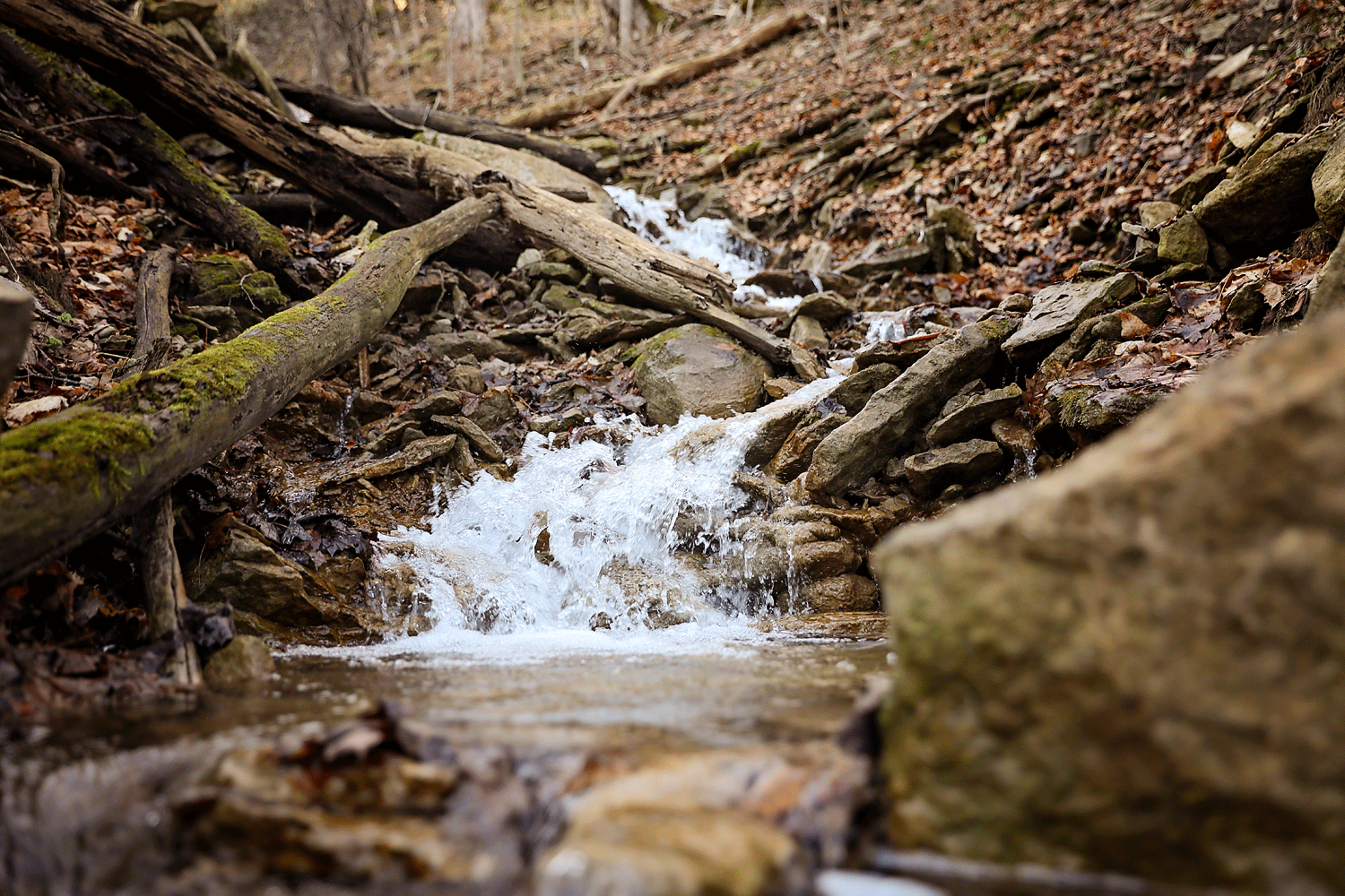 water features - The 14 acre hardwood forest located at the very back of our property is an undisturbed escape into nature. Teaming with streams, it is heaven to your ears. If you are nimble and bring the right shoes, a 30-45 minute hike (not for beginners) features a spectacular 40' waterfall.