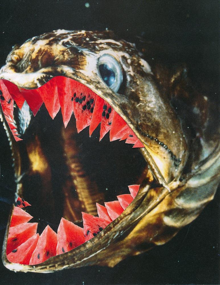 melonfish - ANIMAL KINGDOM