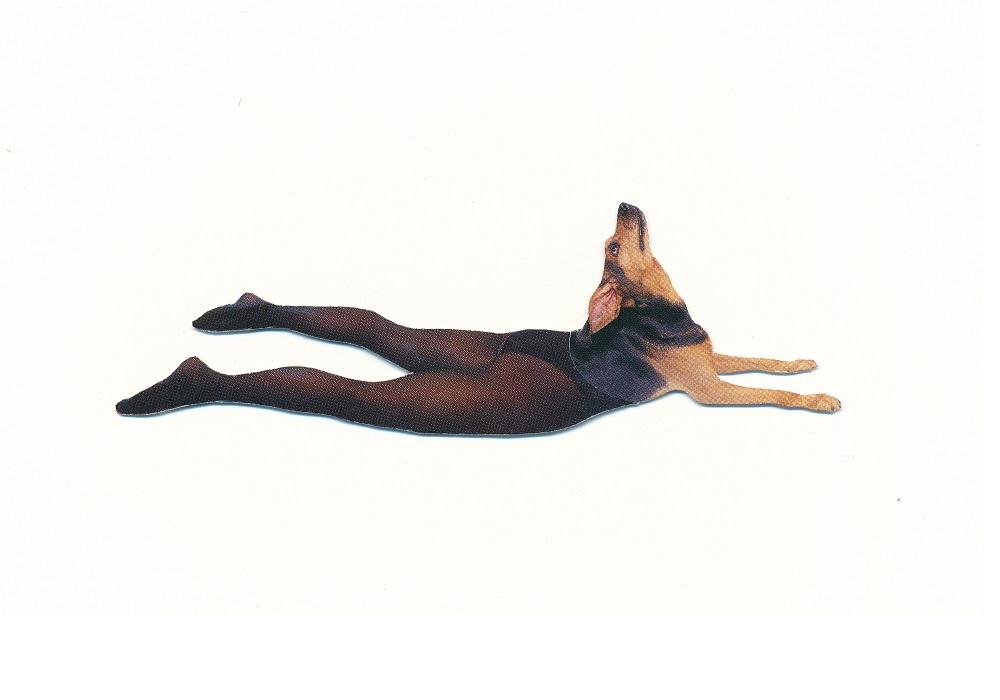 yoga dog - ANIMAL KINGDOM