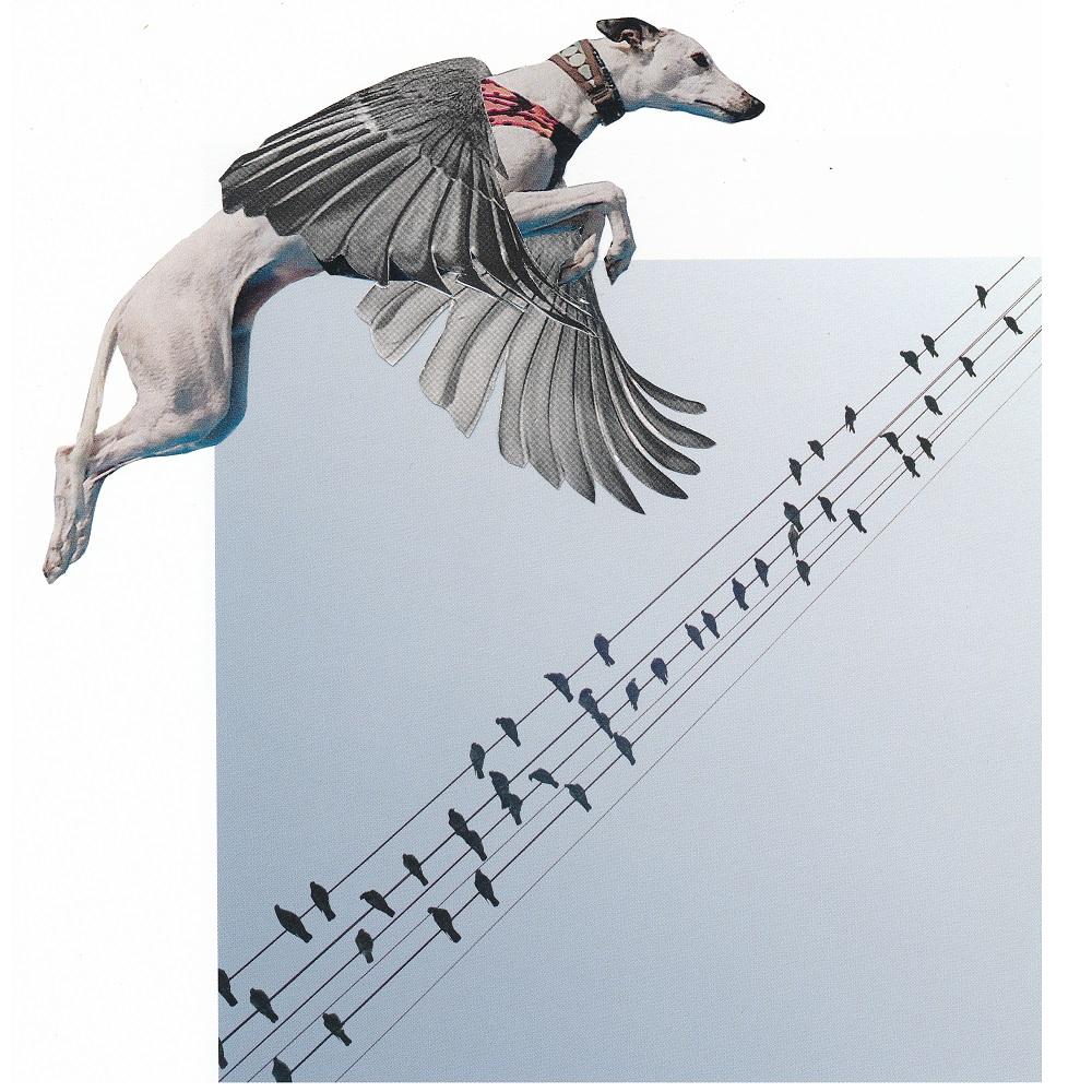wings of liberty - ANIMAL KINGDOM