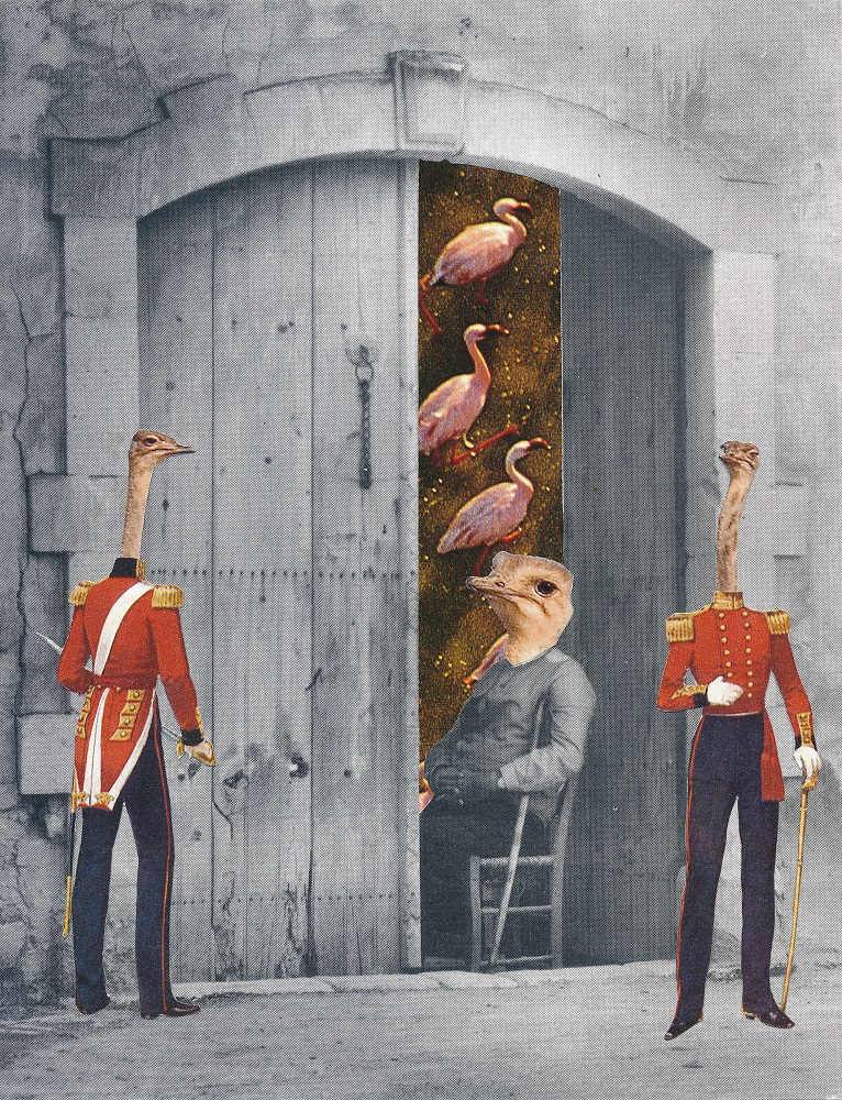 ostrich empire - ANIMAL KINGDOM