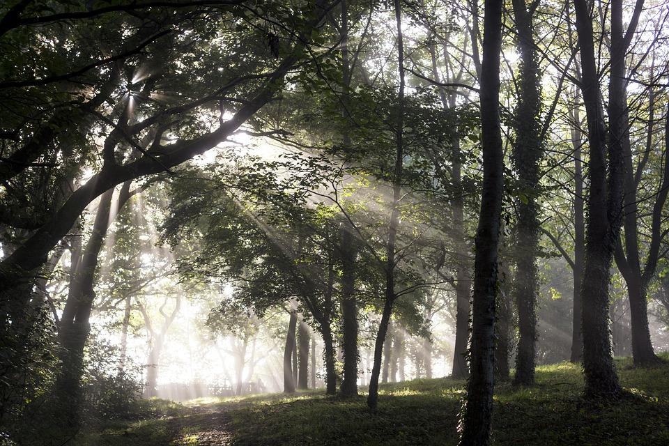 forest-2935923_960_720.jpg
