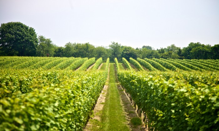 """3 North Fork Wineries With Delicious Food Pairings"""