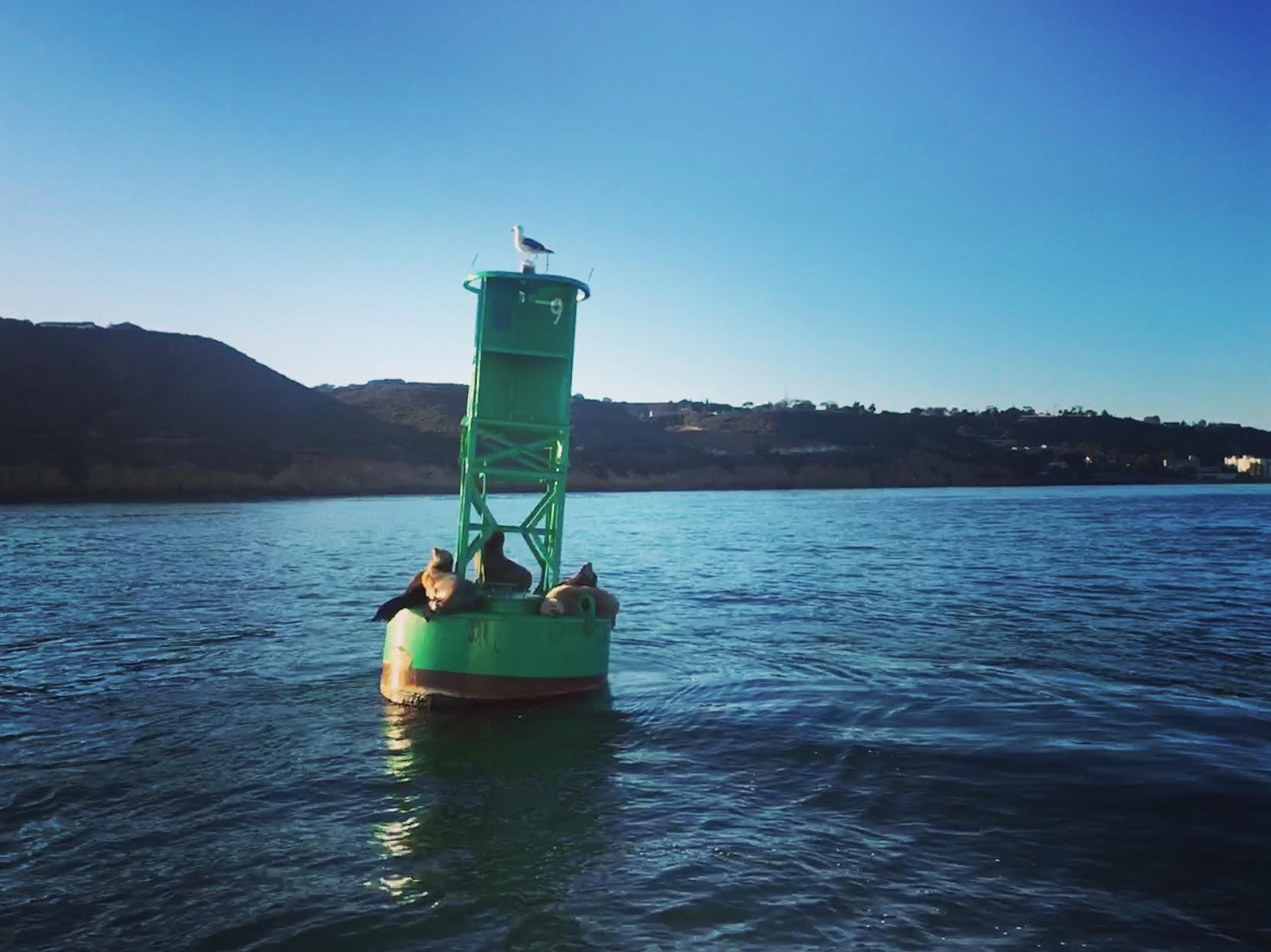 point-loma-seagull-seals-san-diego-bay-buoy.jpg