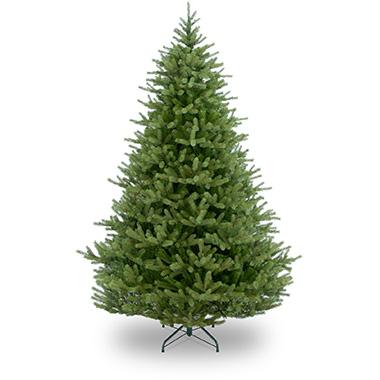 Christmas Trees In Somerset | Fraser Fir