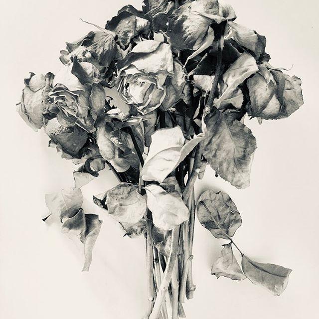 Study 3 #flowersinartinflowers #scent #sentbyscent