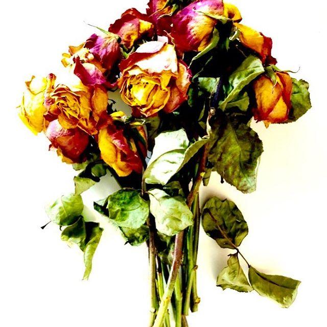 Study 2 #scent #scentlondonflowers #flowersinartinflowers