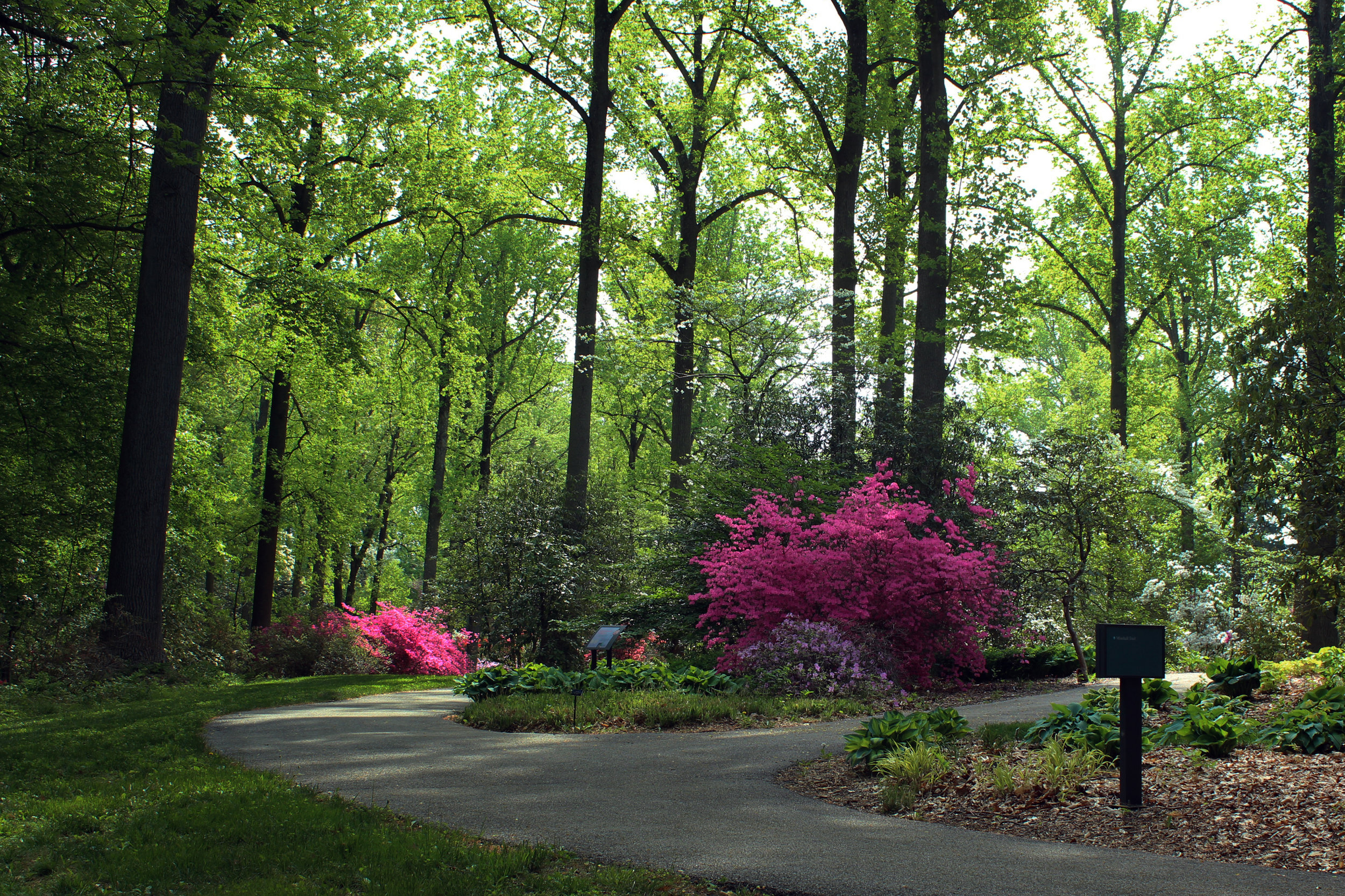 NEW - rhododendron garden and path - DC.jpg