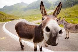 donkeyshop.jpg