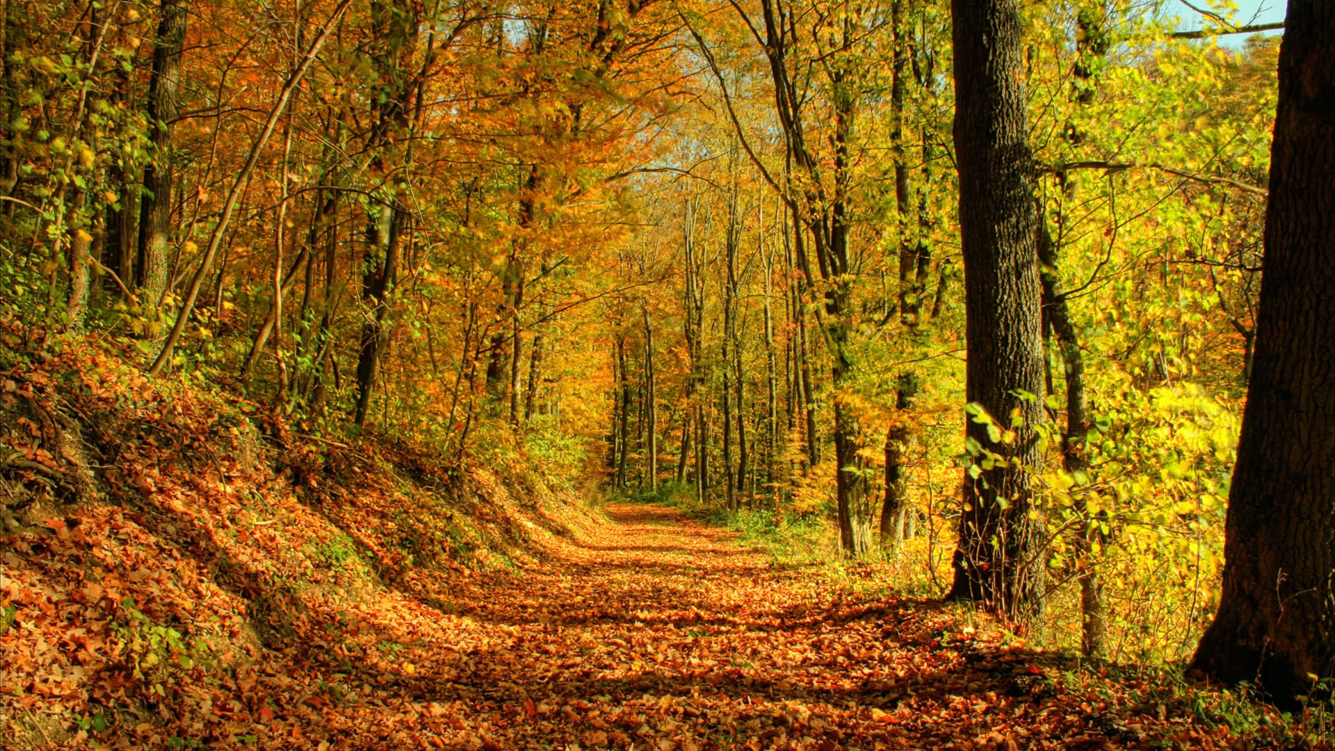 autumns-finest-moments-autumn-beautiful-colours-forest-leaves-nature-path-trail-trees-hd-wallpaper.jpg