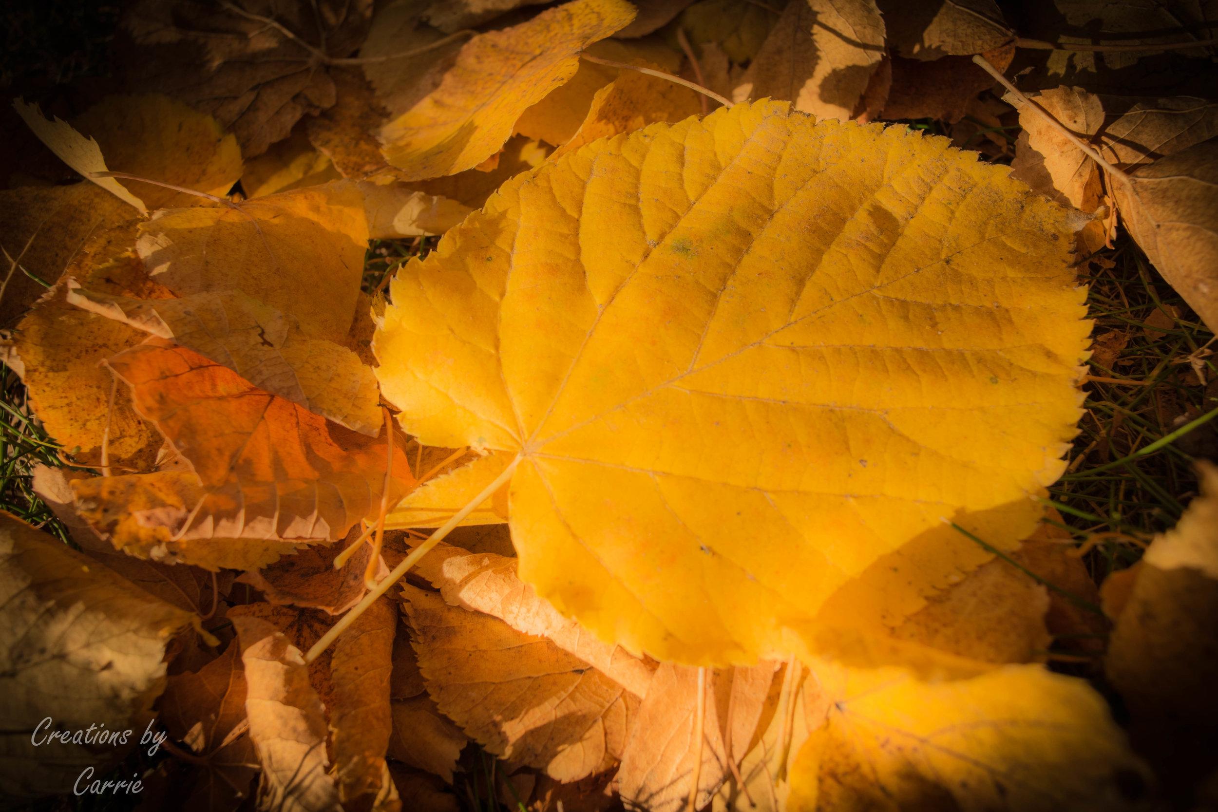DSC_0047 Leaf on Fire.jpg
