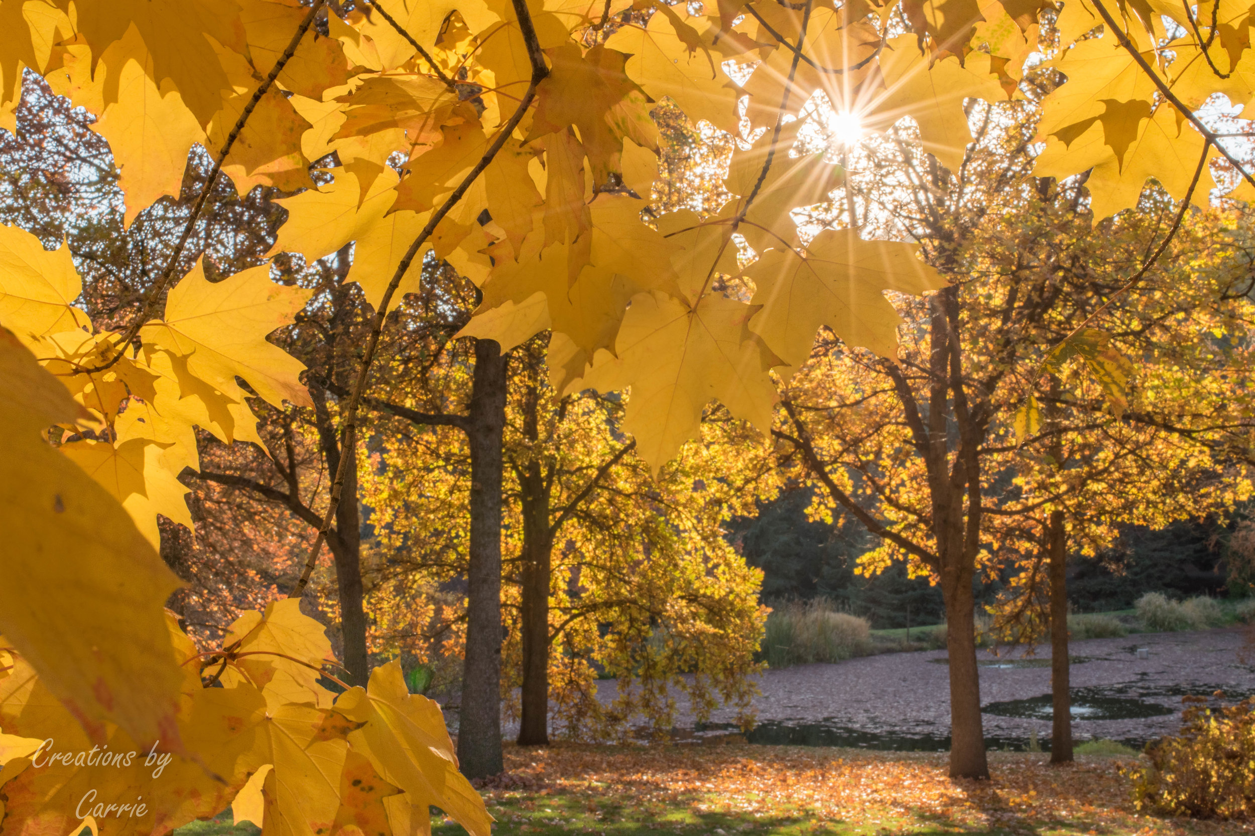 Fall at U of I Arboretum.jpg