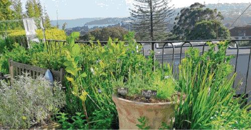 Wentworth Courier, Sept 2018 - Edible garden comes to market