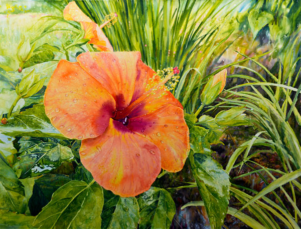 Ross Barbera, Orange Hibiscus, Mounted Watercolor on Canvas, 32 x 42, 2016
